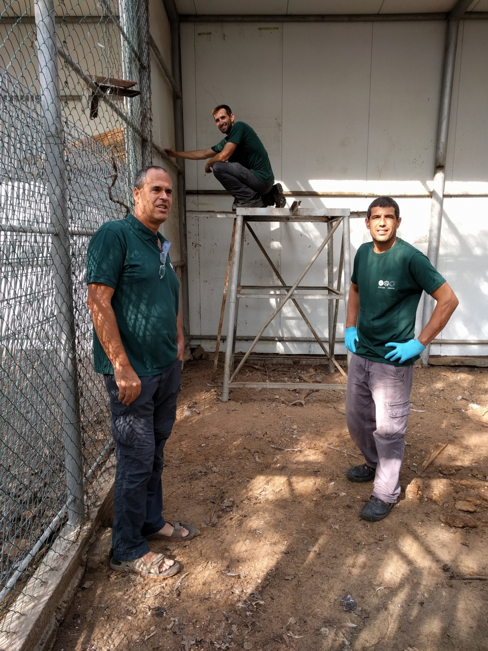 Hadar, Emanuel and Ron, wearing the new staff shirts, renovating the vulture exhibition