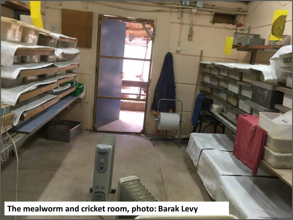 The mealworm and cricket room, photo: Barak Levy