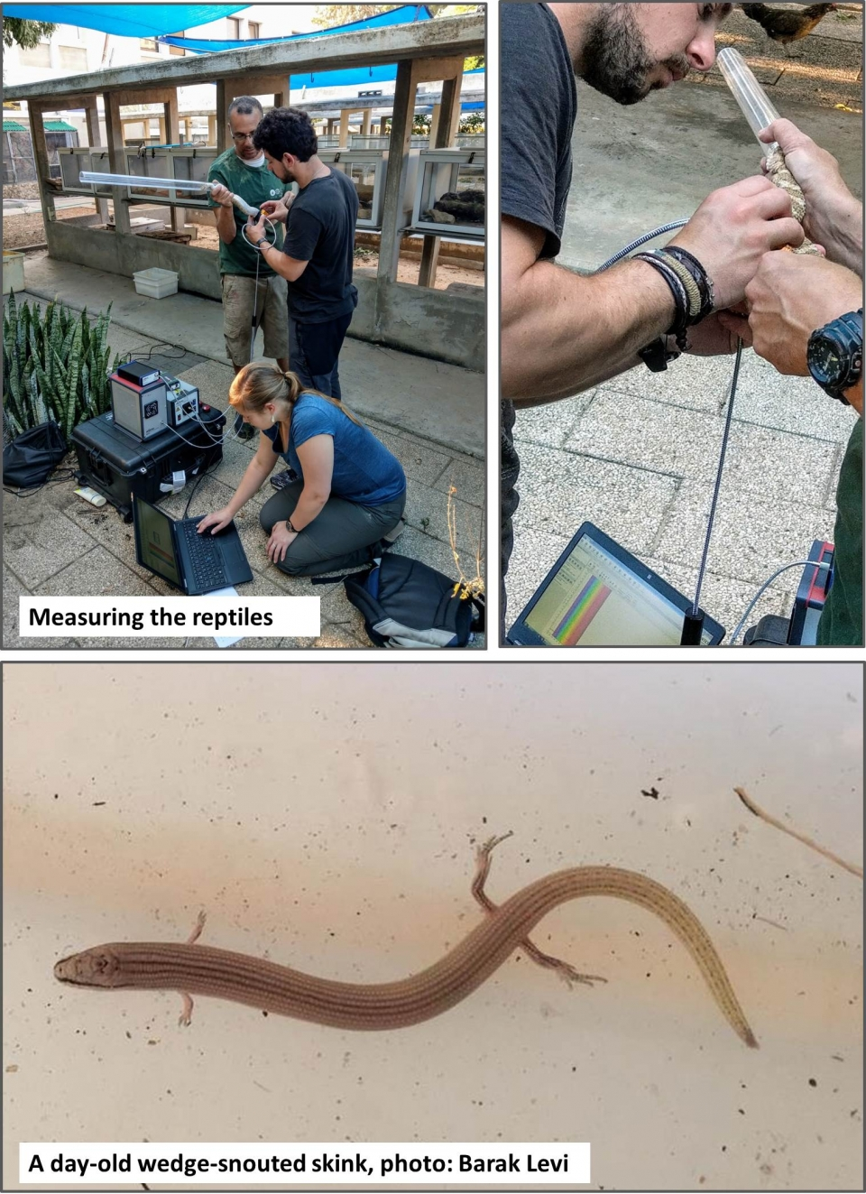 measuring reptiles