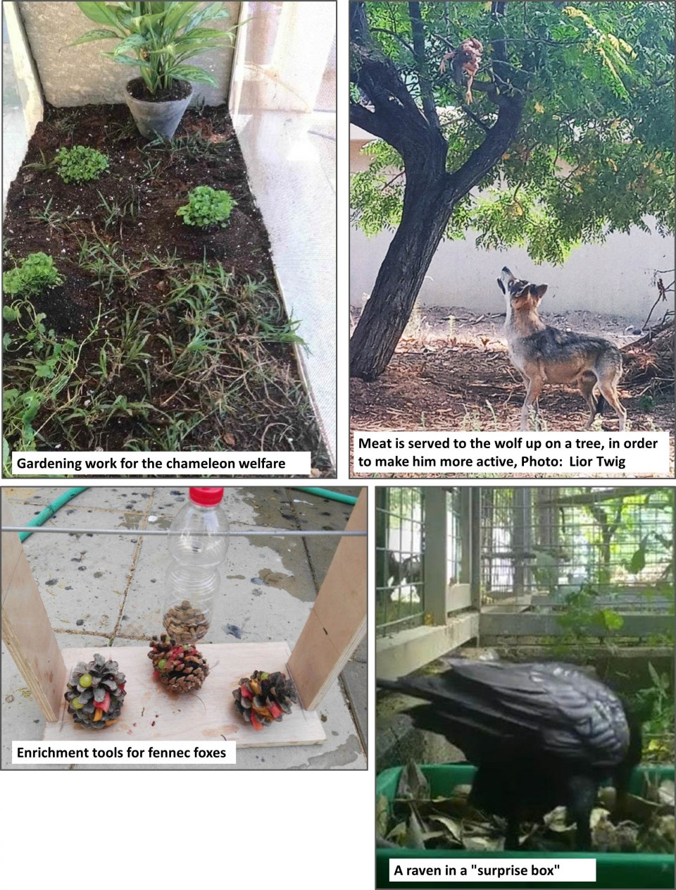enrichment in the zoological garden