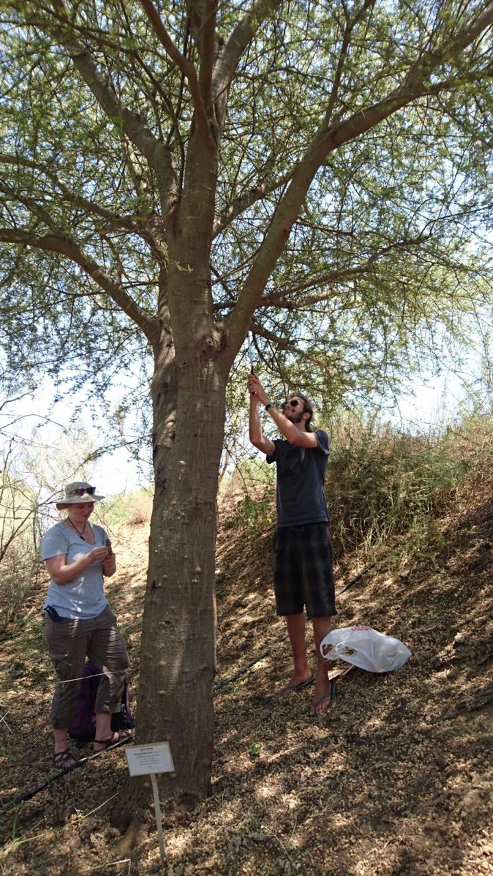 Collecting a sample from a tree